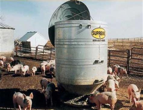 hog feeders for hog feeder