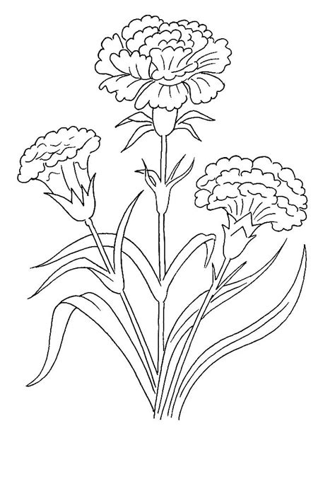 carnation coloring pages    print