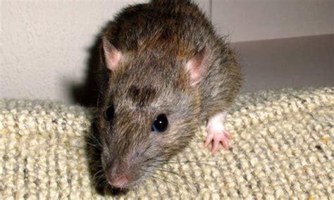 uffici agenzia entrate torino topi negli uffici dell agenzia delle entrate repubblica it