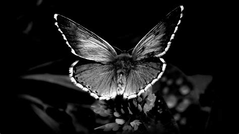 black and white black and white images of butterflies 14 desktop wallpaper