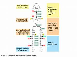 Bio Geo Nerd  Metabolic Pathways