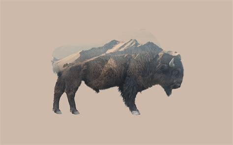 Animal Wallpaper Designs - exposure animals mountain nature bison