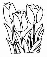 Coloring Flower Tulip Flowers Pages Print sketch template