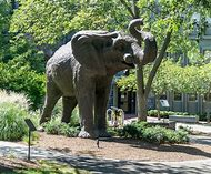 Best Tufts University Ideas And Images On Bing Find What You Ll Love
