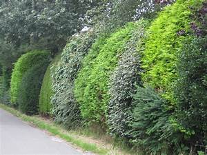 Hohe Sichtschutz Pflanzen : garten sichtschutz deko ideen pflanzen ~ Sanjose-hotels-ca.com Haus und Dekorationen