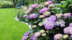 Hortensien Wann Schneiden : hortensien schneiden hortensien richtig schneiden ~ Lizthompson.info Haus und Dekorationen