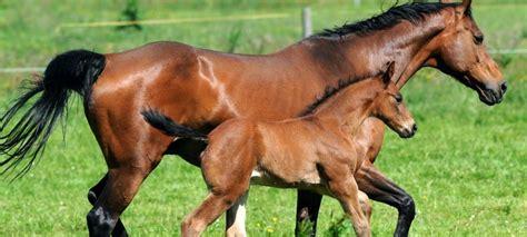 fotos pferden die sprache der pferde duda news