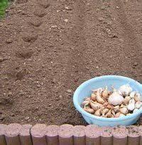 Planter Ail Rose : 10 best garden lychnis coronaria rose campion images on pinterest rose campion backyard ideas ~ Nature-et-papiers.com Idées de Décoration
