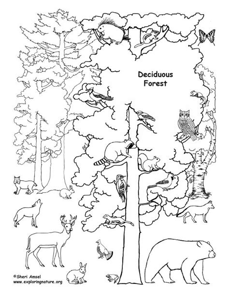 forest coloring pages deciduous forest with animals coloring nature