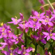 fiori do bach fiori di bach agrimony
