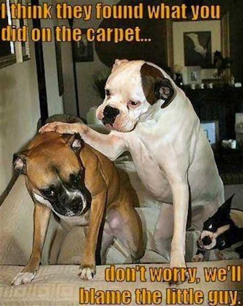 Funny Boxer Dog Memes - dog jokes one liners funny jokes4laugh