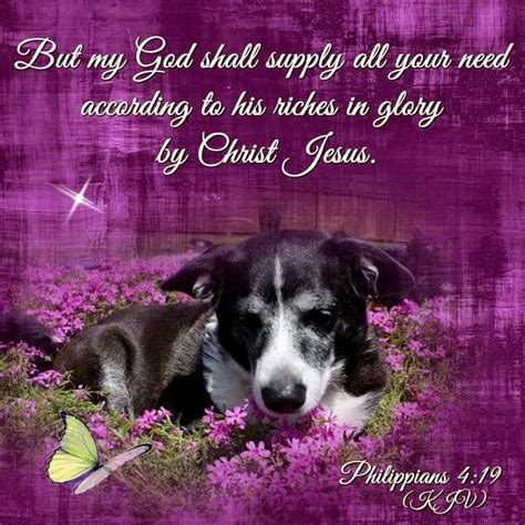 animals bible verses images  pinterest
