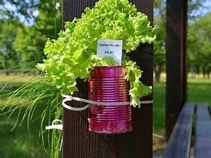 Minigarten Im Glas : mini garten deko bambus deko mini garten in der holzkiste vbs hobby bastelshop tipps ideen ~ Eleganceandgraceweddings.com Haus und Dekorationen