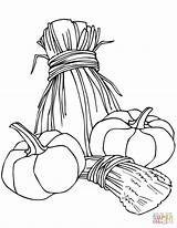 Wheat Coloring Pumpkins Sheaves Leaves Template Printable Maple Oak Templates sketch template