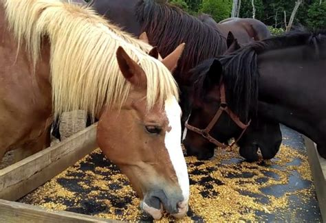 horse feeds feed
