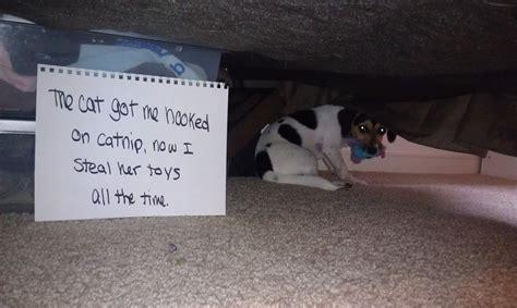 hilarious dog shaming signs