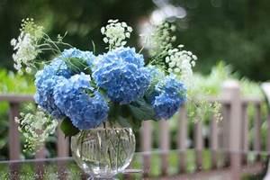 Welche Pflanzen Passen Gut Zu Hortensien : blaue hortensie sorgt f r eine pr chtige farbe im garten ~ Heinz-duthel.com Haus und Dekorationen