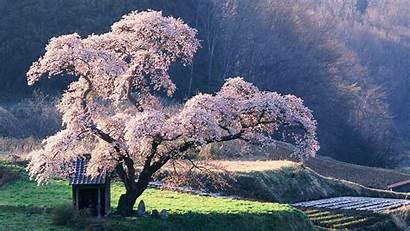 Nature Trees Desktop Wallpapers Background Backgrounds Landscape