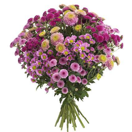Ziedu piegāde | Krizantēmu pušķis: Purpurs
