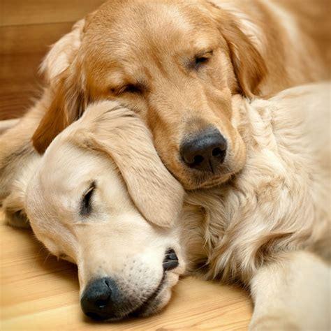 Welches Schlafbedürfnis Hunde haben ⋆ Hunde
