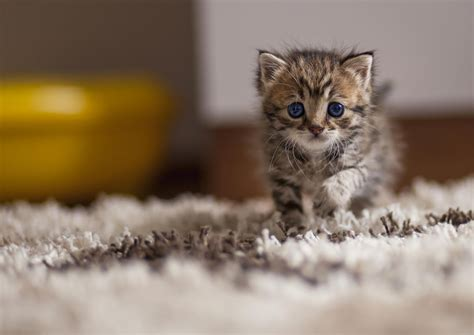 Lovely Animals Wallpapers - 25 adorable cat photos
