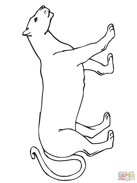 Cougar Coloring Pages Childrens Publishing Post From