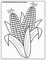 Corn Coloring Pages Printable Cob Sheets Indian Colouring Sheet Template Printables Autumn Fall Ears Popular Coloringhome Flower Put sketch template