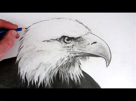 draw  eagles head tl youtube