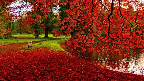 Fall Backgrounds Free Download Pixelstalknet