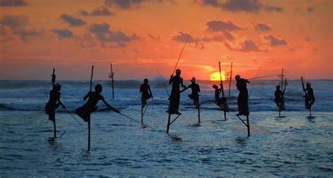 Traditional Fishermen Standing On A Stilts In The Sea In