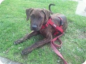 Cleopatra Jones | Adopted Puppy | Woodland Hills, CA ...