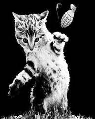 cat designs arm  animals clothing