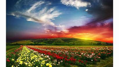 Nature Spring Wallpapers 4k Colorful Flowers Background