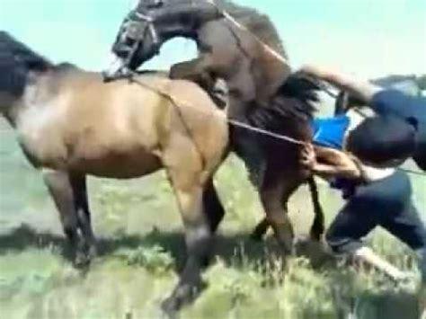 de burro  caballo monta salvaje cruza de youtube