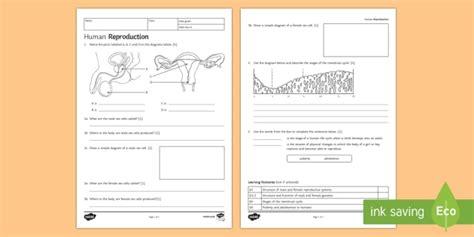 ks3 human reproduction homework worksheet worksheet homework