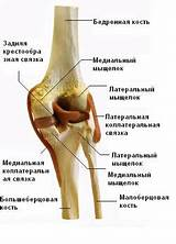 Сустав болит и опухает колено
