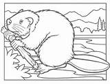 Beaver Coloring Pages Beavers Printable Animals Dam Clipart Animal Education Colouring Clip Cliparts Drawing Biber Winter Wpclipart Library Adult Canadian sketch template