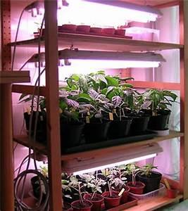 Salat Pflanzen Abstand : chili zucht tipps chilis unter kunstlicht ziehen pepperworld ~ Markanthonyermac.com Haus und Dekorationen