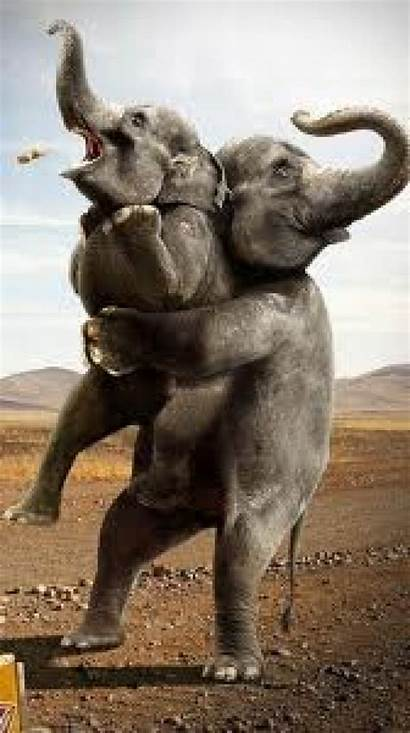 Funny Wallpapers Animated Mobile Elephant Resolution Desktop