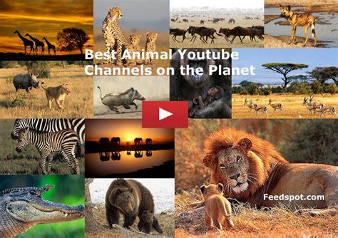 top  animal youtube channels  animal widlife
