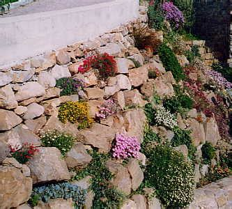 flowers for rockery alpine and rockery plants