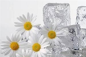 Кубики льда против морщин отзывы