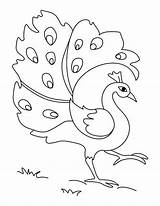 Peacock Drawing Simple Easy Coloring Drawings Green Pages Clipart Sketches Colorful Sketch Peacocks Colors Colouring Cliparts Printable Clip Kid Designs sketch template