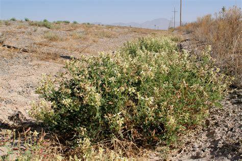malodorous plant polyploid net sw plants