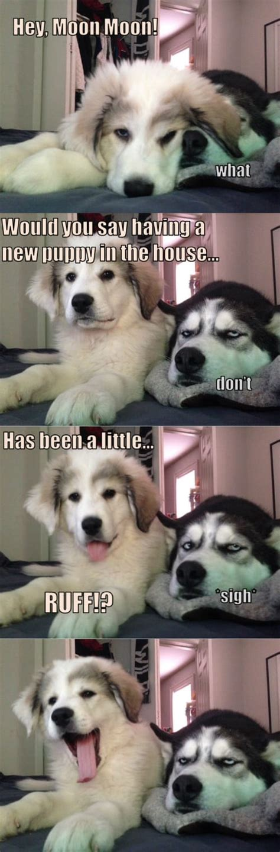 child husky  thrilled     puppy sister