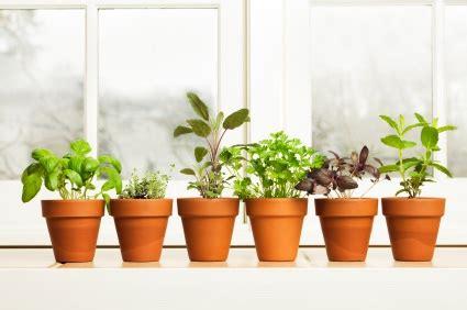 windowsill gardening harvest  table