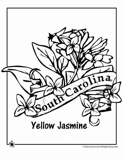 Coloring Carolina State Flower North South Pages