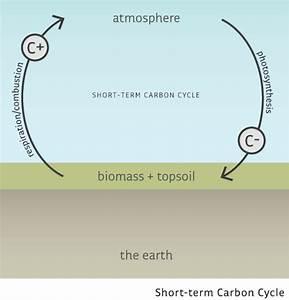 35 Carbon Cycle Simple Diagram