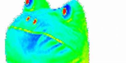 Frog Rainbow Transparent Gifs Vore Title Gfycat