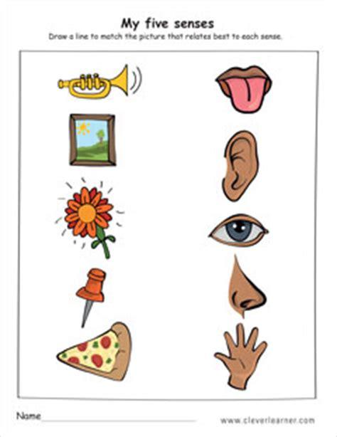 the five senses worksheets for preschools 316   the five senses worksheet preschool